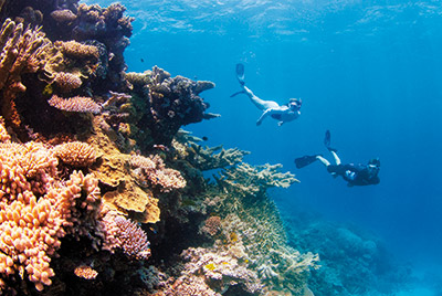 Coral Expeditions Queensland 4 Tage ab Cairns