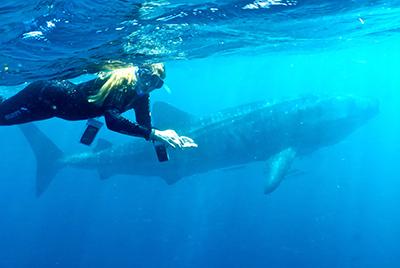 Whaleshark Tour