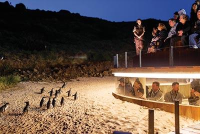 Phillip Island & Pinguine