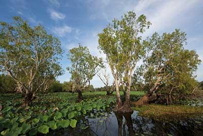 Kakadu & Litchfield Discovery 3 Tage ab/bis Darwin