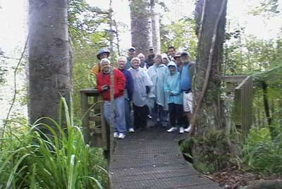 -kauri_forest_walks_3.jpg