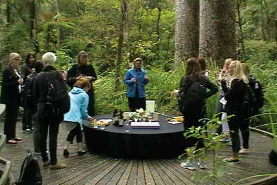 -kauri_forest_walks_4.jpg