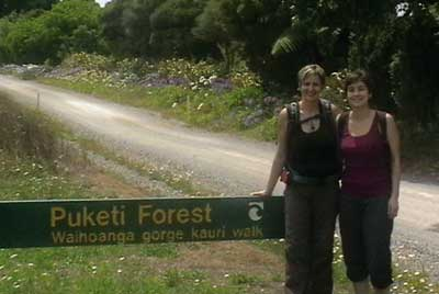 -kauri_forest_walks_5.jpg