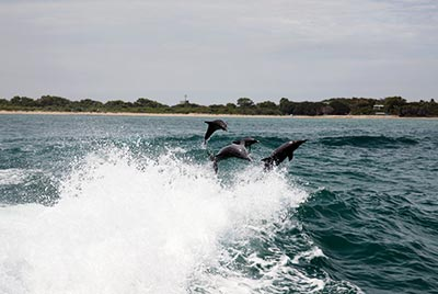 Dolphin Swim Tour